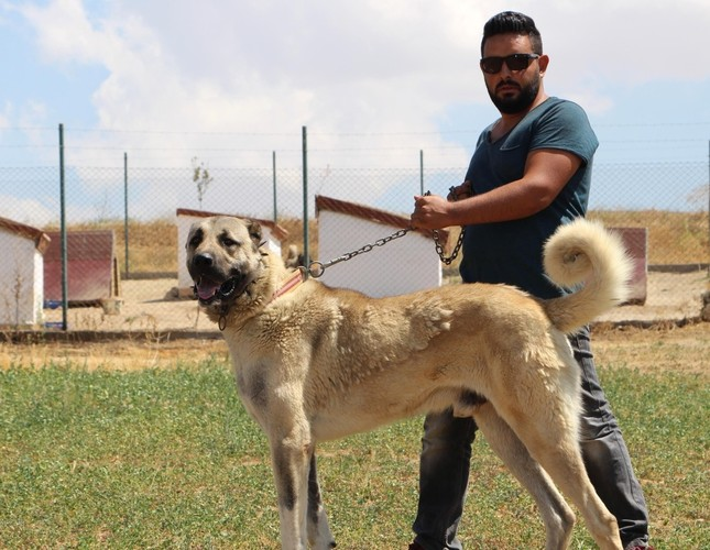 Turkish riot police to replace German shepherd with