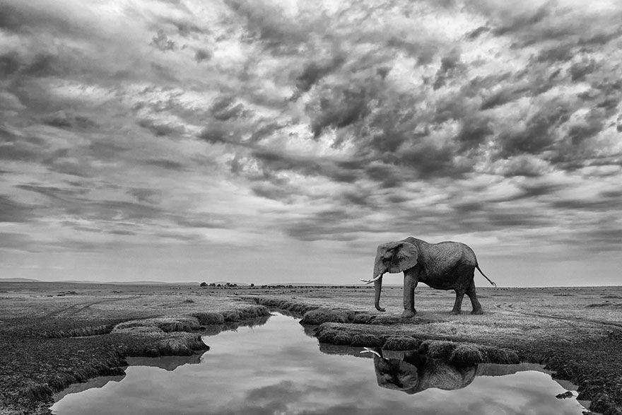 Giant Serenity, Kenya - Honorable Mention, General Monochrome
