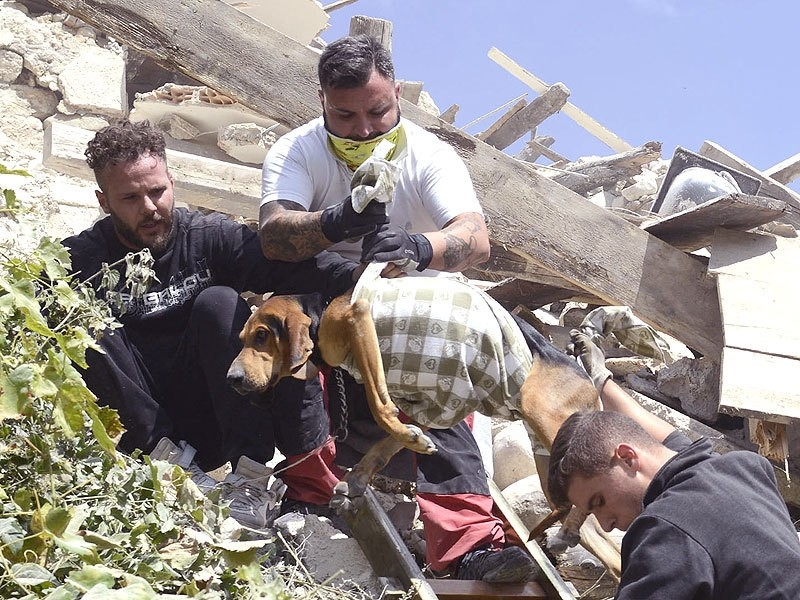 Rescuers recover a dog from a collapsed house after an earthquake hit Pescara del Tronto. (AP Photo)