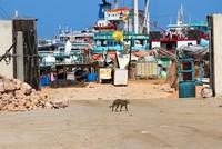 Al-Shabaab gunmen kill Maltese director of Somali port