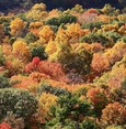 From yellow to red, Autumn is showing its colors in Küre Mountains