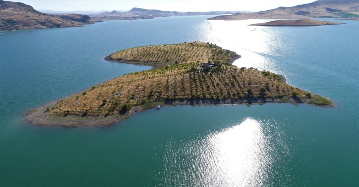 Abay's island is home to 3,500 trees now after 14 years.