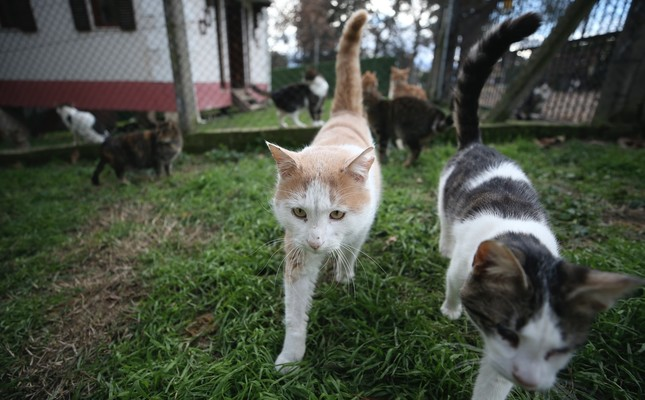 Stray cats of Turkey's Bursa live under one welcoming roof