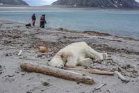 Polar bear shot dead after attacking German cruise worker