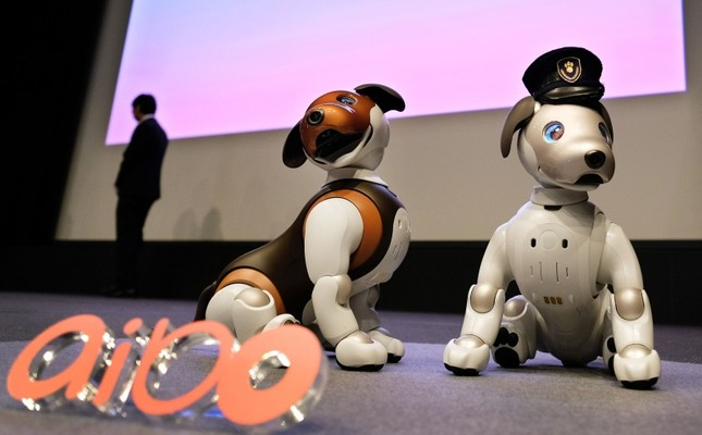 Versions of Sony's puppy-sized robot dog Aibo, including a 2019 limited special colour model (L), are displayed during a press conference at the company's headquarters in Tokyo on January 23, 2019 (AFP Photo)