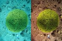 Turkish scientist's algorithm may revolutionize underwater photography