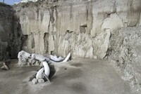 15,000-year-old human-made mammoth traps found in Mexico