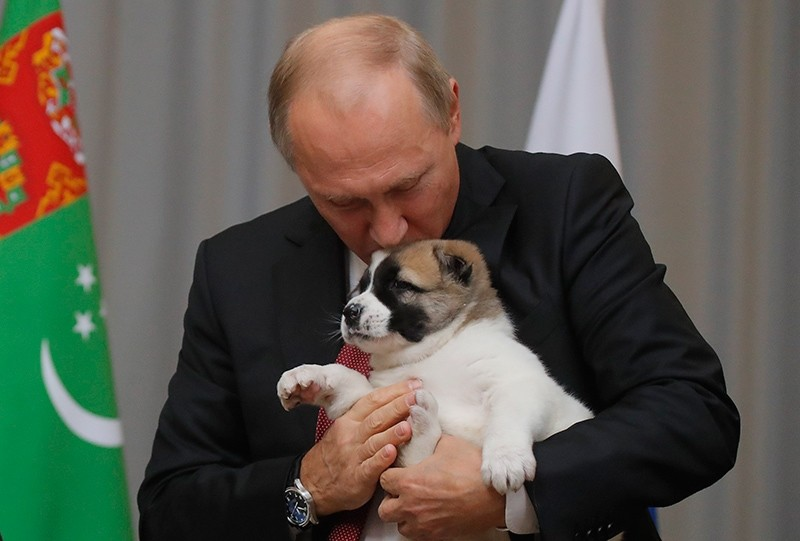 Russian President Vladimir Putin kisses a Turkmen shepherd dog, locally known as Alabai, presented by Turkmenistan's President Gurbanguly Berdimuhamedov during a meeting in Sochi, Russia Oct. 11, 2017. (AFP Photo)
