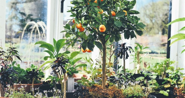 Introduction to home gardening: Bring your dream garden indoors ...