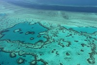 Great Barrier Reef 'died 5 times' in past 30,000 years, study says