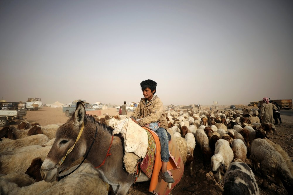 An internally displaced boy who fled Raqqa herds sheep while riding a donkey in a camp near Ain Issa, Raqqa Governorate, May 19.
