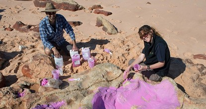 pAn unprecedented 21 different types of dinosaur tracks have been found on a stretch of Australia's remote coastline, scientists said Monday, dubbing it the nation's Jurassic...