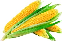 Beyond taste: The many health benefits of corn