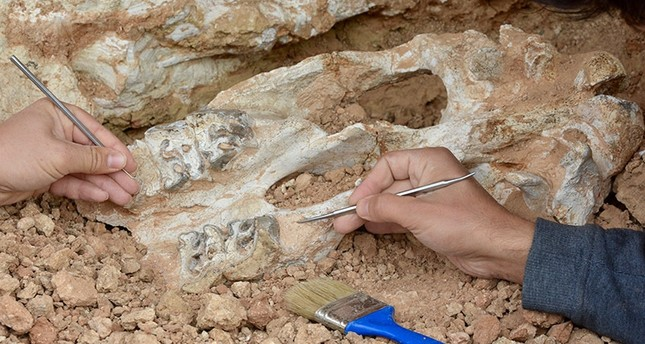 Fossil found in the district of Kaman in Kırşehir province in central Turkey. (AA Photo)