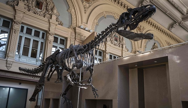 mystery-dinosaur-skeleton-expected-to-fetch-2m-at-paris-auction-1521145889495.jpg