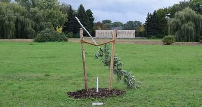 Zwickau: Gedenkbaum für NSU-Mordopfer abgesägt