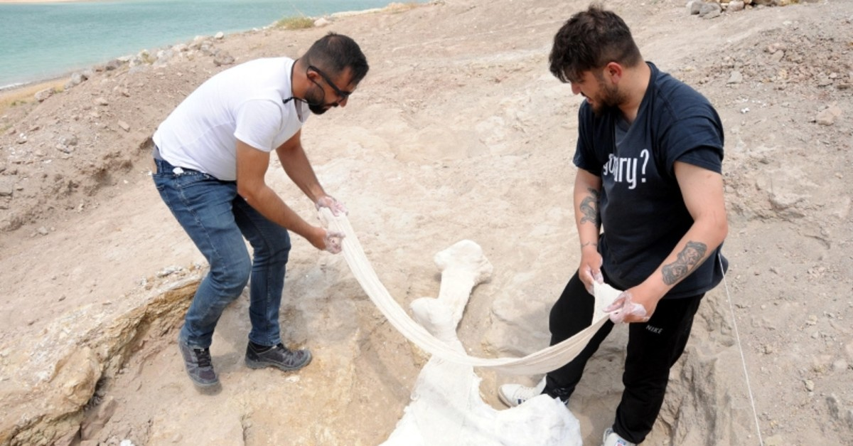 Excavation team members pull the hipbone belonging to an elephant in Kayseri province, Wednesday, July 23, 2019 (DHA Photo)