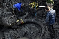 Last mammoths lived on remote island, research says