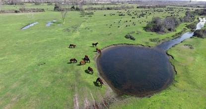 Kızılırmak Delta springs to life in northern Turkey