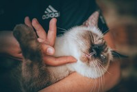 Love of cats comes from their soothing influence and purr