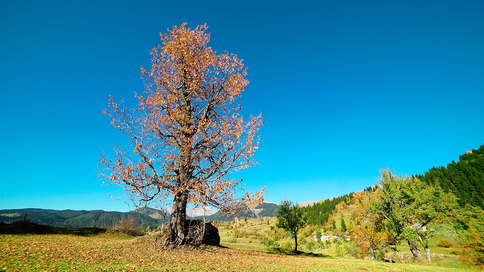 Turkey's Black Sea mountains come alive with color
