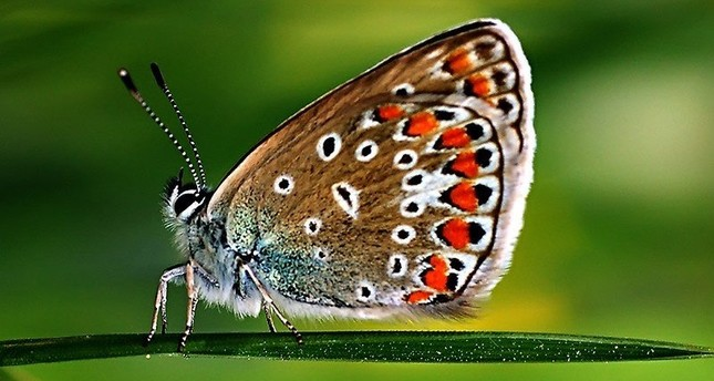 Butterflies from Philippines to debut at Gaziantep Zoo