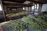 The women of Boğatepe, which is a village located 2,780 meters (9,121 feet) above sea level in Kars, have founded a plant drying atelier with the aim of evaluating the plant diversity in the...