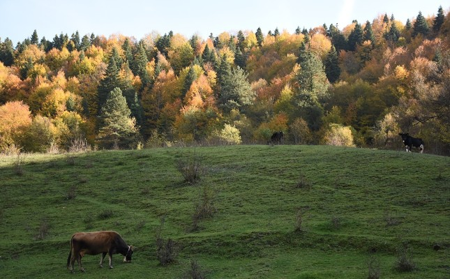 Soaking up the last of autumn in the Black Sea's Küre Mountains