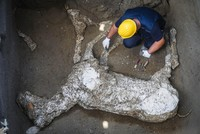 Complete remains of racehorse unearthed in Pompeii excavation