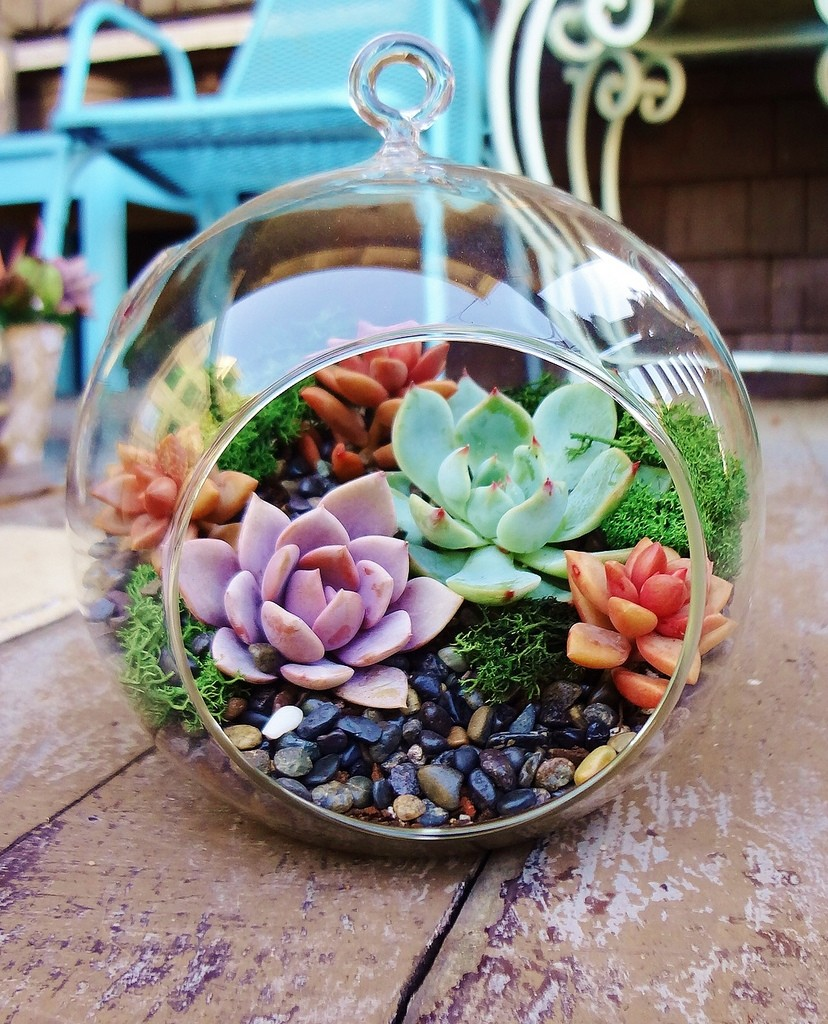 Terrariums: Miniature Gardens For Plant-obsessed Urban