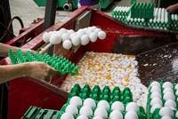 Belgiens Agrarminister Denis Ducarme hat mit Unverständnis auf das Vorgehen der nationalen Lebensmittelbehörde FASNK im Fipronil-Skandal reagiert. Laufende Ermittlungen der Staatsanwaltschaft seien...