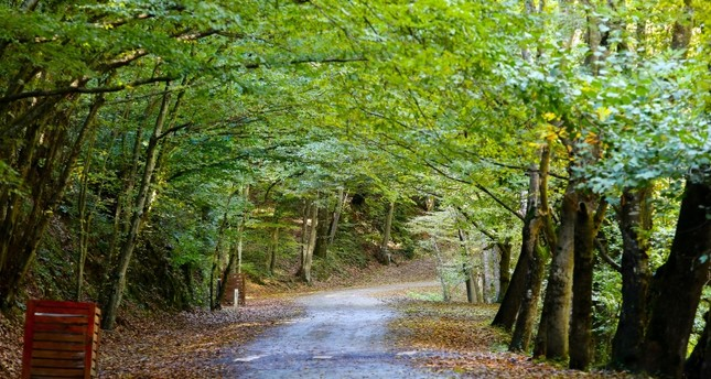 Belgrad Forest in Istanbul in the fall Sabah File Photo