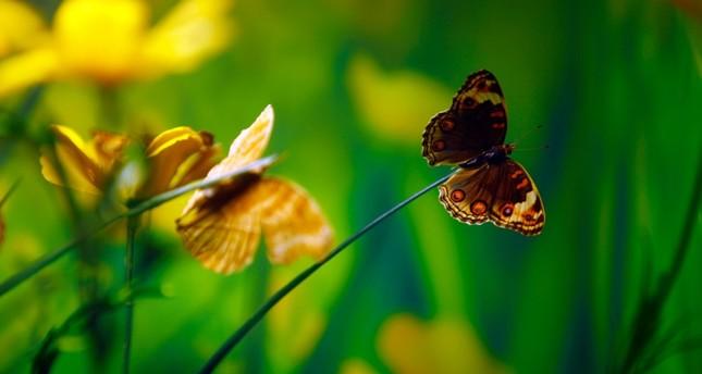 حديقة الفراشات الإستوائية بقونية التركية تستقطب 1.5 مليون زائر منذ 2015