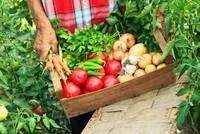 Vegan diet lowers risk of heart disease but linked to stroke