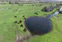 Kızılırmak Delta springs to life in northern Turkey's Samsun
