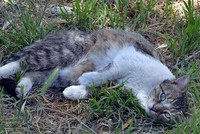 Famous stray cat 'Yeşim' dies in Turkey's Manisa