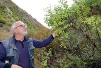 Walking for hours in the forests and mountains around Anatolia, searching for even the smallest plant is an easy task for Kadir Yaşar, 56, who has made it his life's work to find and identify the...