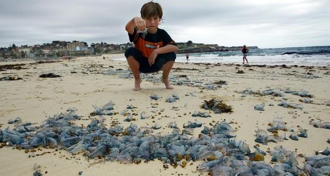 Thousands stung in jellyfish invasion in Australia's Queensland
