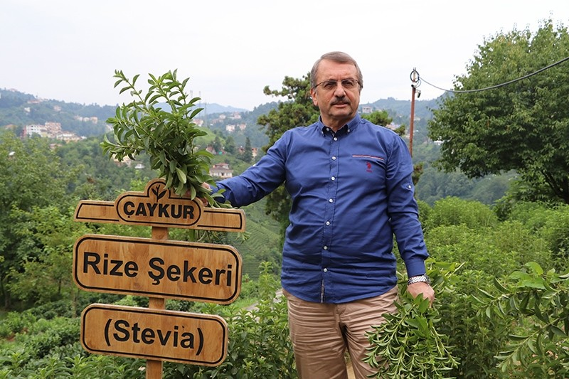 u00c7aykur General Manager Imdat Su00fctlu00fcou011flu stands next to a sign that says ,Rize Sugar, in Turkish, Rize, Turkey, July 24, 2017. (IHA Photo)