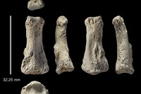 90,000-year-old finger fossil in Saudi desert challenges migration theory