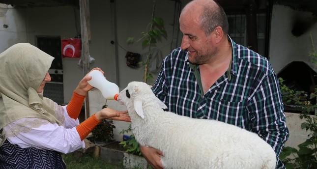 الحمل لوقوم.. طفل بامتيازات كاملة لدى أسرة تركية