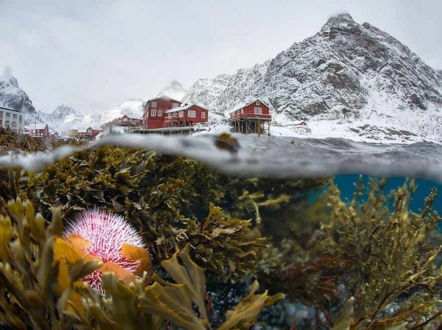 Underwater View Of The Winter Lofoten - Remarkable Award, The Beauty Of Nature