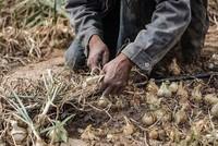 Israel destroys Gaza farmland by flooding
