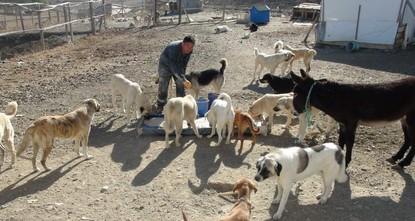 Guardian angel of Yozgat's stray dogs