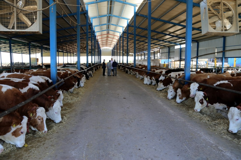More than 200 businesspeople from Gulf countries visited Konya to examine its agriculture and livestock industry.
