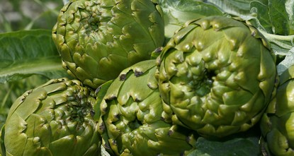 pThe 3rd International Urla Artichoke Festival is going to take place from April 28-30 in the Aegean town of Urla, located south of the city of İzmir. The festival intends to introduce a special...