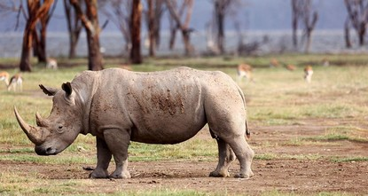 Rhino poaching in South Africa sees 'significant' decline: minister