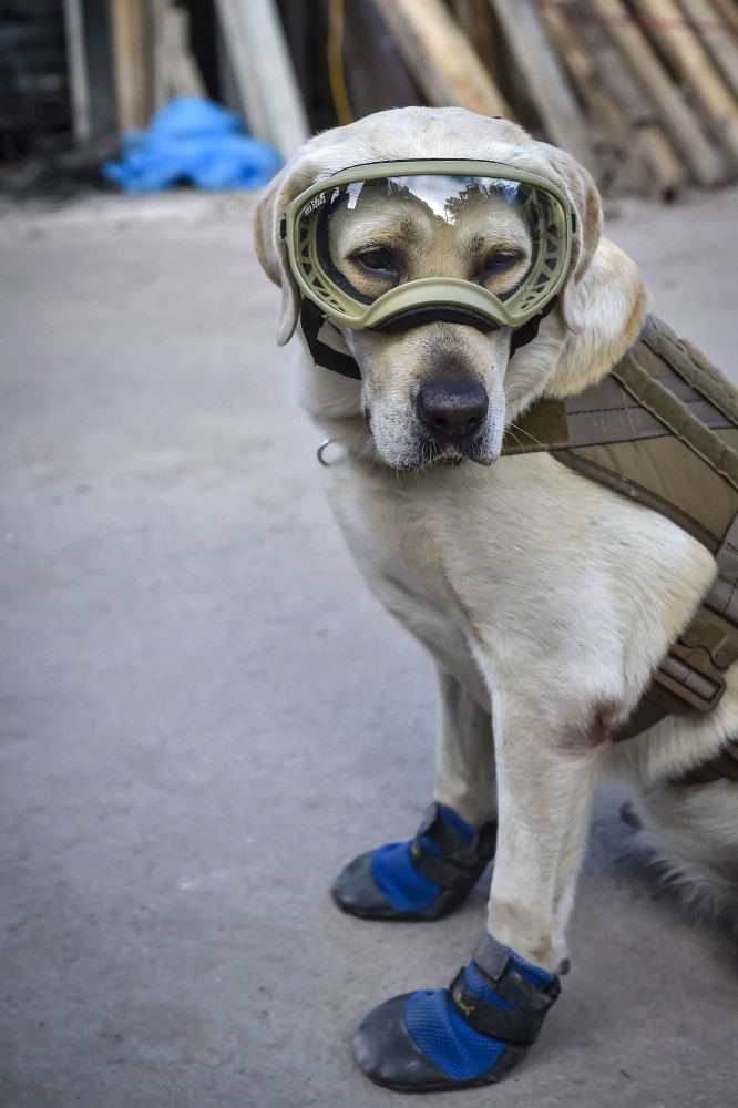 Frida, a rescue dog belonging to the Mexican Navy, takes a break while participating in efforts to search for people trapped at the Rebsamen school in Mexico City.