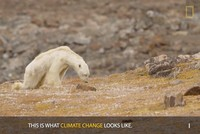National Geographic admits lying to its readers about the dying polar bear