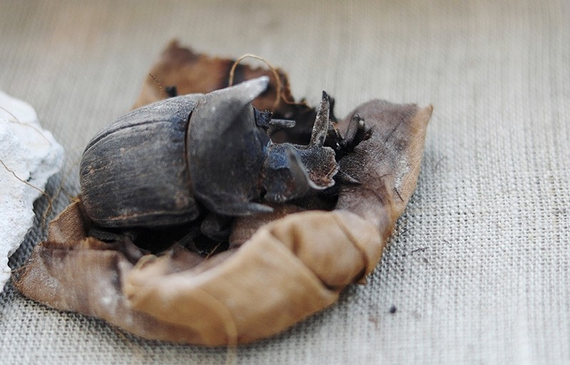 A mummified scarab inside the tomb of Khufu-Imhat on display, at the Saqqara area near its necropolis, in Giza, Egypt Nov. 10, 2018. (Reuters Photo)